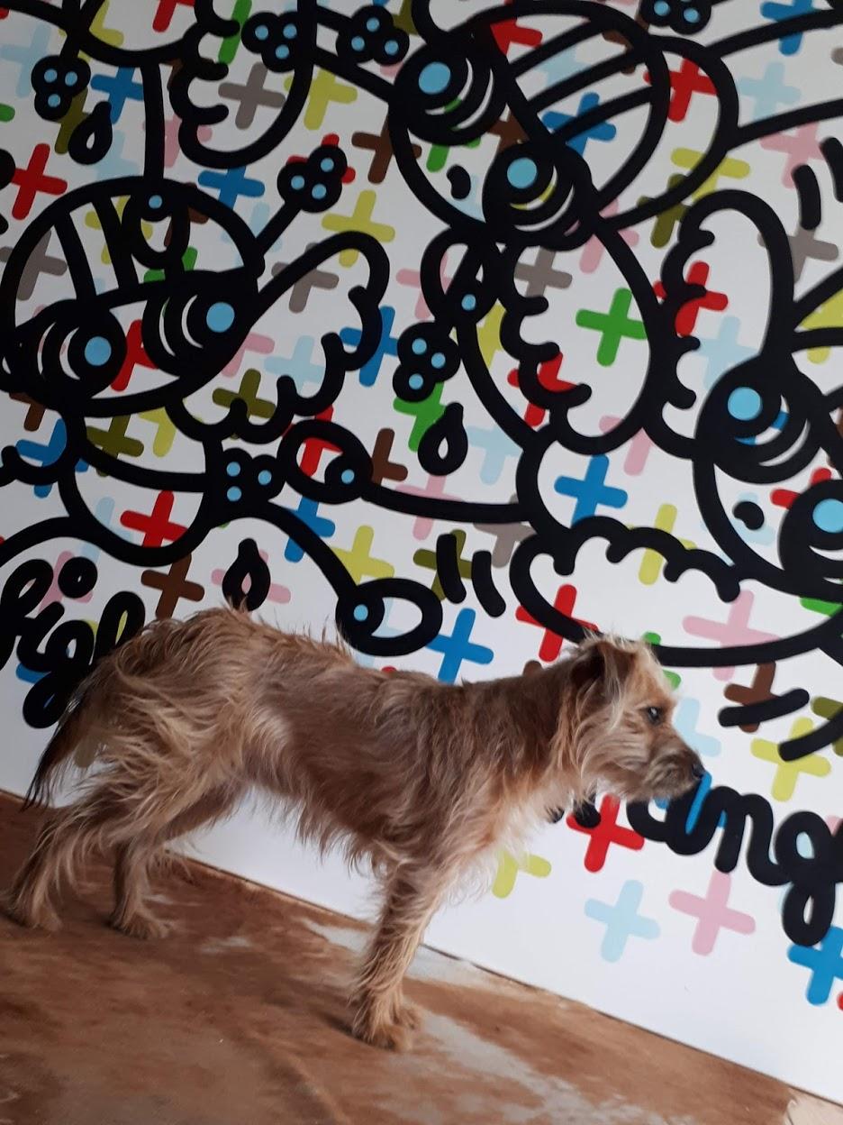 Snoc Dog devant